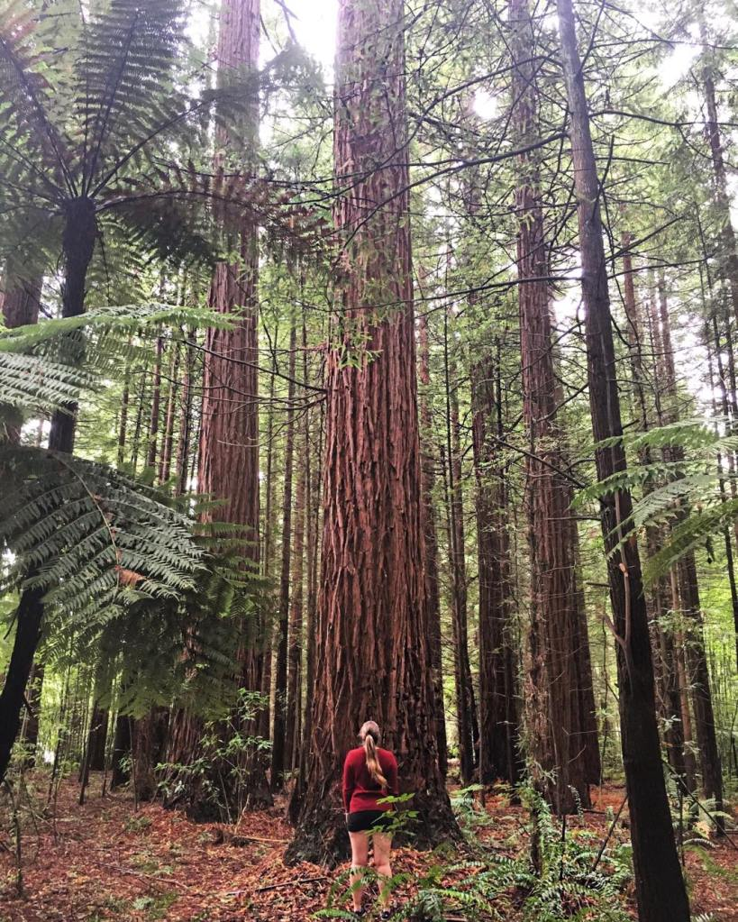 Girl looking up in a forest of red wood trees